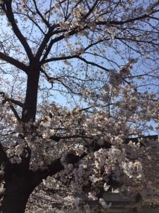 桜二条駅前
